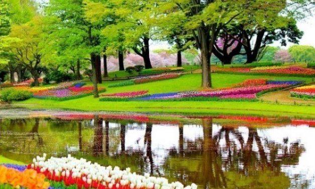 Giardini di tulipani in fiore ad Amsterdam e dintorni